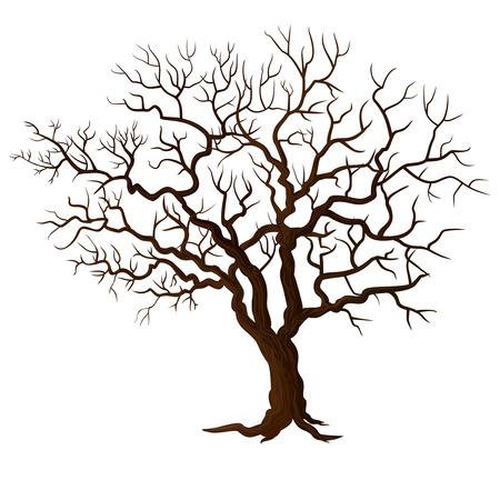 Boom zonder bladeren die op wit worden geïsoleerd