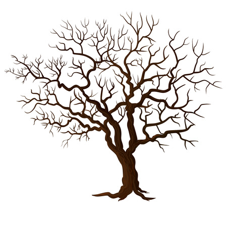 life and death: Tree without leaves isolated on white
