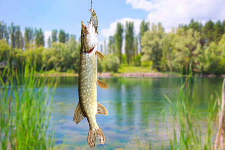 Pike on the background of the river landscape Stok Fotoğraf
