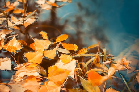 Beautiful autumn leaves fell into the water in the autumn Stock Photo