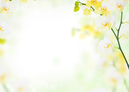 Delicate flower floral background of yellow orchids Standard-Bild