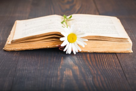 daisie: Old book and daisie flower on wooden table Stock Photo