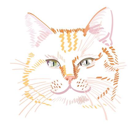 Vector illustration de chat rouge isolé sur fond blanc