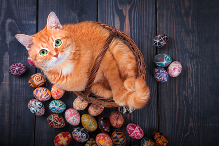 イースターの卵の周りに木製の背景にバスケットに座って猫。