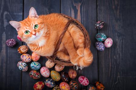 Zitting van de kat in een mand op een houten achtergrond met Pasen eieren rond.