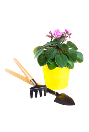 Violet in a flowerpot with a shovel and rake isolated on white background Stock Photo