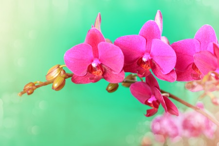 Branch of a pink orchid on a green background close up.