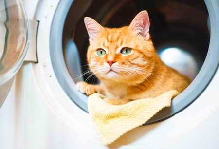 Cute red cat in the washing machine. Stok Fotoğraf