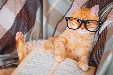 Cute red cat in glasses lying on sofa with book Stock Photo