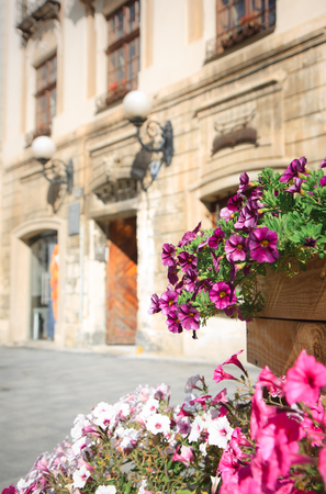 Colorful flowers blooming in the flowerpot in the old street with classic architecture.