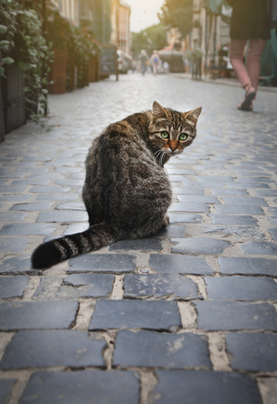 A homeless cat is sitting on the city street. Stock Photo