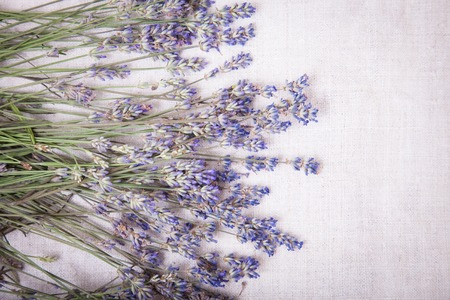 Fresh lavender flowers on gray fabric background. Top view of a fresh lavender flowers, copy space for your text.