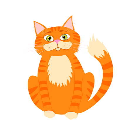 Beau chat rouge mignon isolé sur fond blanc.