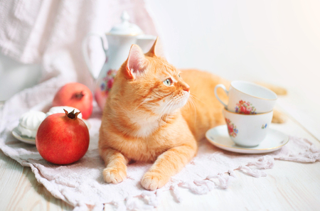 Red cat lying near white tableware in the mornig. Still life and cat. Stock Photo