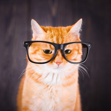 Domestic tabby cat with eyeglasses on a dark background.