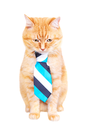 Red cat in a tie, studio shot, isolated on white background. Stock Photo