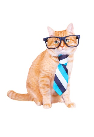 Cat with glasses and tie isolated on white background. Studio photo, pets concept, business.