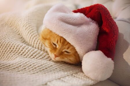 Cute red cat sleeping in the hat of Santa Claus.