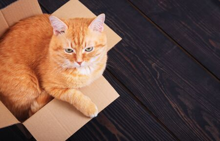 Red domestic cat sitting in a cardboard box on a wooden background, studio. Фото со стока
