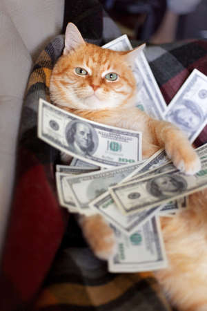 Cat with american dollars in paws lying on the sofa. The concept of success and wealth. Banco de Imagens - 151214886