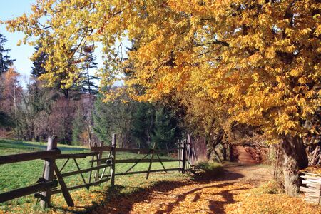 Old house in the woods on a beautiful autumn sunny day, rural landscape.
