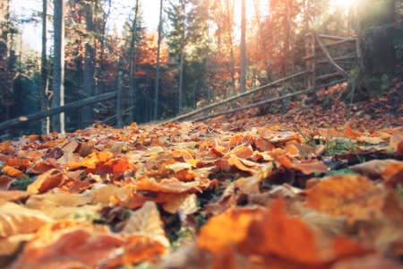 Autumn landscape with fallen leaves on a bright sunny day. Banco de Imagens - 155302735