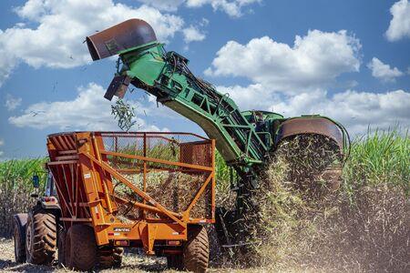 Machine harvesting sugar cane plantation.