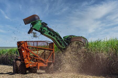 Machine harvesting sugar cane plantation.