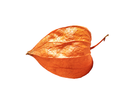 The fruit of ripe physalis on an isolated background.