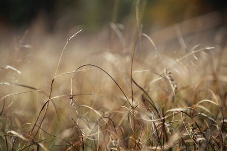 Autumn landscape with dead grass in the field. Stock Photo