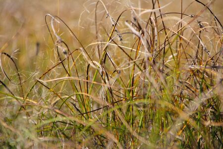 Dry autumn October grass in the field. Stock Photo