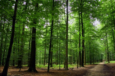 Green sunny forest on belgium