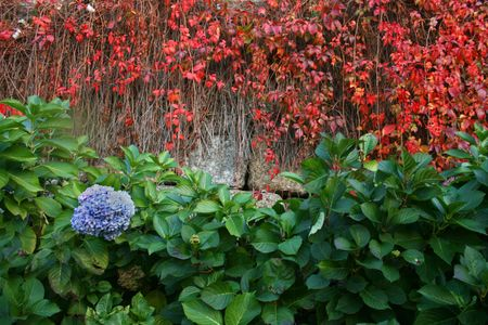 flowers and plants growing up on a wall. photo