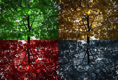 Four seasons tree photo