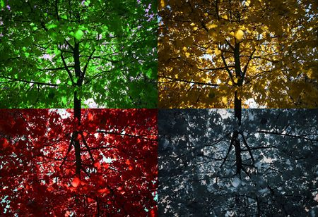 season: Four seasons tree
