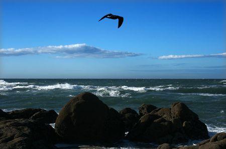 Seagull birds hunting on a rock breach
