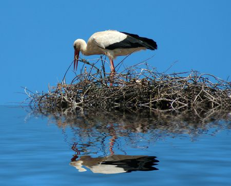 a mother stork bird on a chimeny Stock Photo - 4888222
