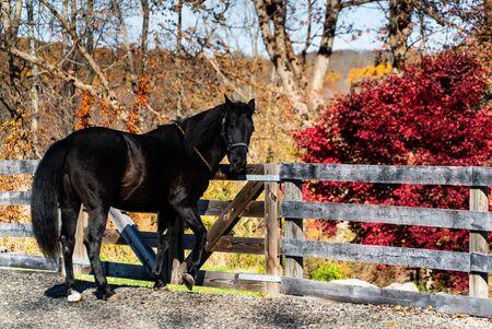 Horse in the paddock at fall season