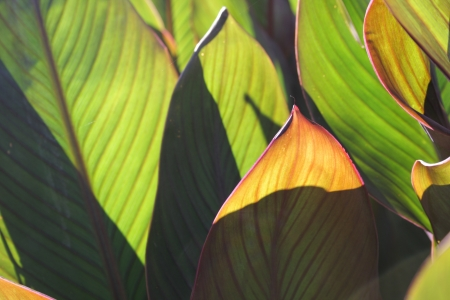 Green leaves - as the background and texture Stock Photo - 18751464