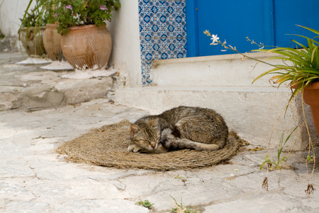 sidi bou said: The gray cat sleeping on mats in front of the house in Sidi Bou Said, Tunisia
