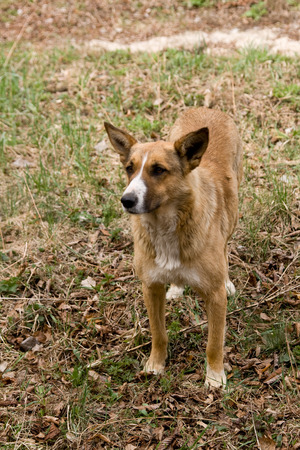 pooch: Stray dog pooch who lives in the Chernobyl exclusion zone