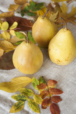 flavorful: Juicy flavorful pears of nature background Stock Photo