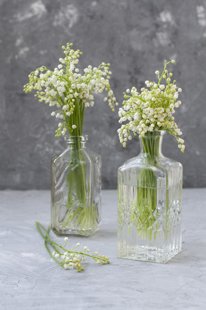 Wresh bouquets of lilies of the valley in glass vases on the gray background.