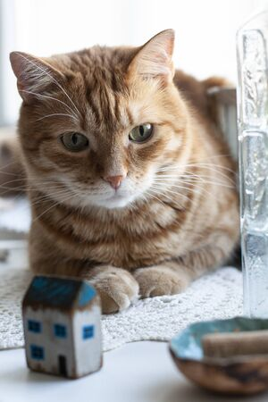 A cute ginger cat sitting on a windowsill; a decorative toy house, a bottle of water on a white background.