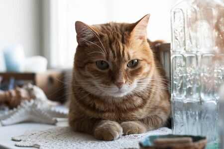 A cute ginger cat sitting on a windowsill; a decorative lantern, seahell, a box with candles, starfish and a bottle with water on a white background.