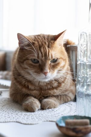 A cute ginger cat sitting on a windowsill; a bottle of water on a white background. Stok Fotoğraf