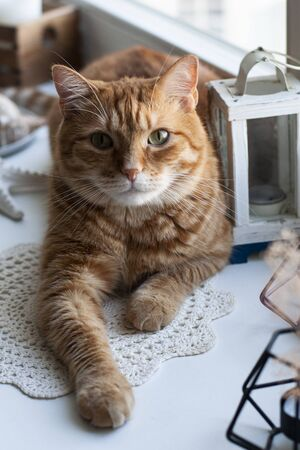 A cute ginger cat sitting on a windowsill; a decorative lantern, seahell, a box with candles, starfish on a white background. Stok Fotoğraf