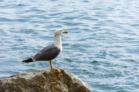 Gulls are typically medium to large birds, usually grey or white, often with black markings on the head or wings.