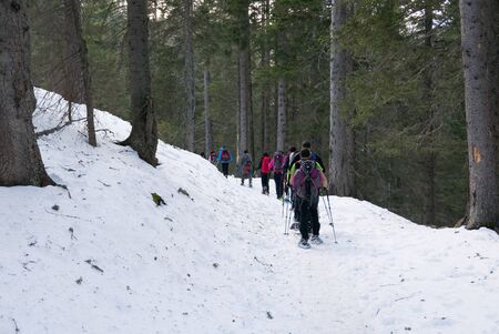 Group of hikers trekking in the mountains of the Alps. The trekkers are going through a snowy forest. Italy