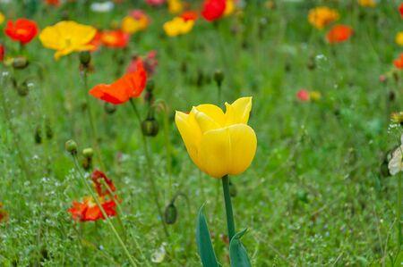 yellow flower in a field of flowers